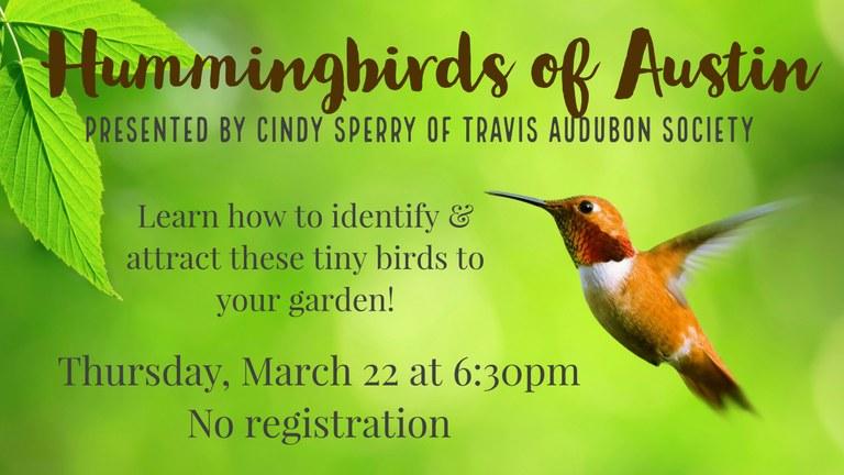 2018-03-22 Hummingbirds.jpg