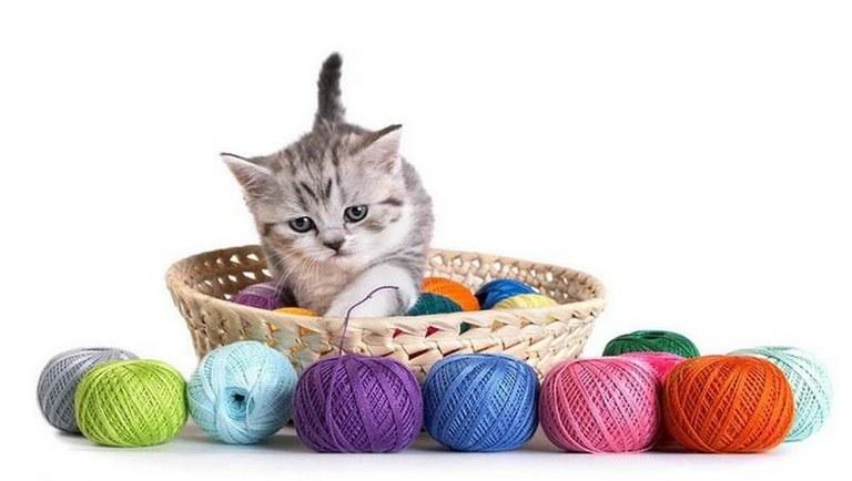 Kitten with yarn.jpg