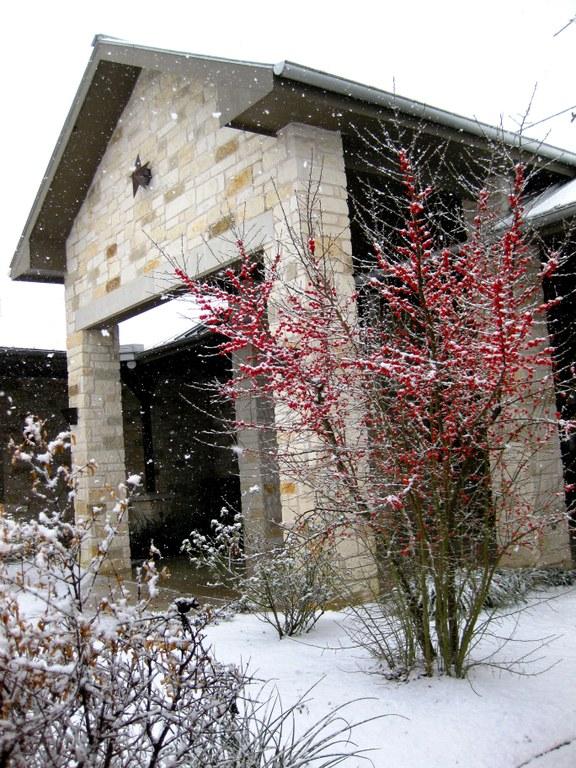 Snow- Feb 2010